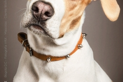 Fotografía de Mascotas - KIONA