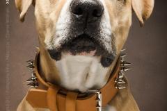 Fotografía de Mascotas -LOKI