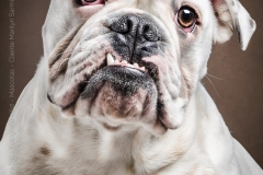 Fotografía de Mascotas -PANCHA